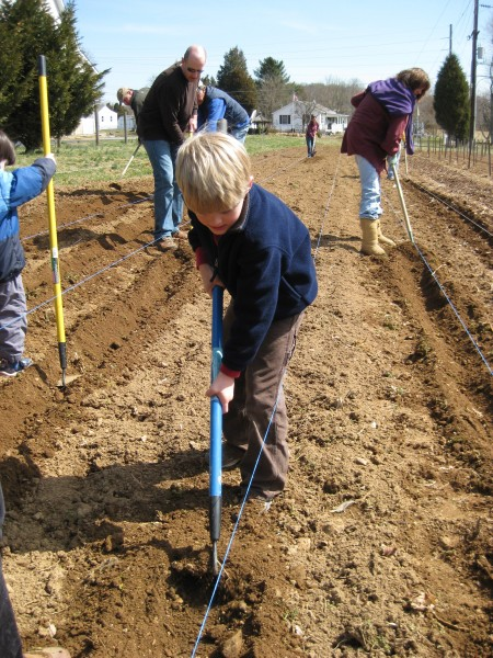 Planting our food at Calvert Farm