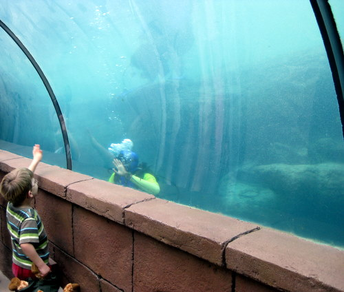 Saying hi to a diver at the Atlantis Resort Bahamas