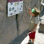 Practicing paleontology at the Arizona-Sonora Desert Museum