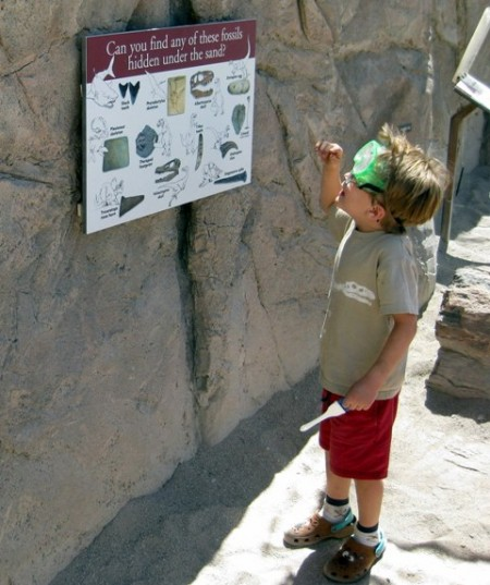 Can you find fossils-Arizona Sonora Desert Museum