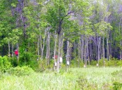 Birdhouse forest in South Hero Vermont