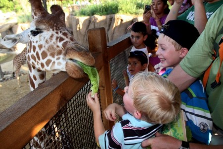 Feeding the giraffes at the Dallas Zoo
