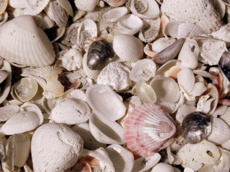 Shells on Bowman's Beach Sanibel Island