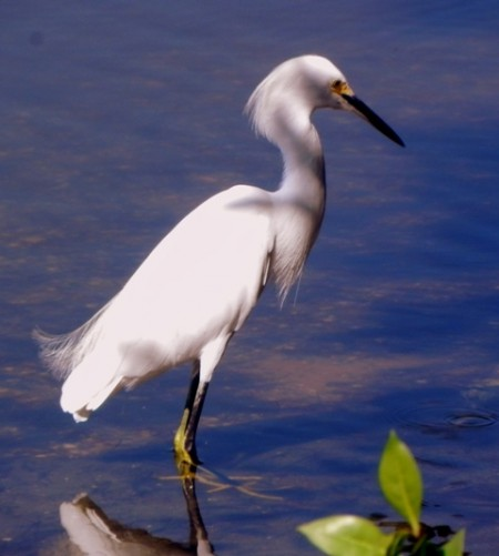 Abounding wildlife on Sanibel Island