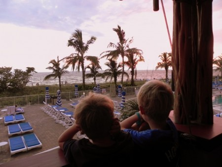 Fort Myers: Gazing at the Florida palm trees