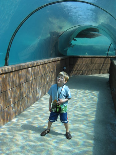 In the shark tunnel Atlantis Resort Bahamas