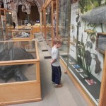 Mondays are for dreaming: The Oxford University Museum of Natural History