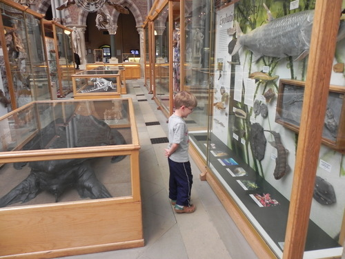Looking at exhibits Oxford Museum of Natural History