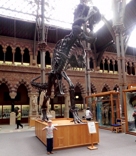 Oxford Museum of Natural History T Rex skeleton