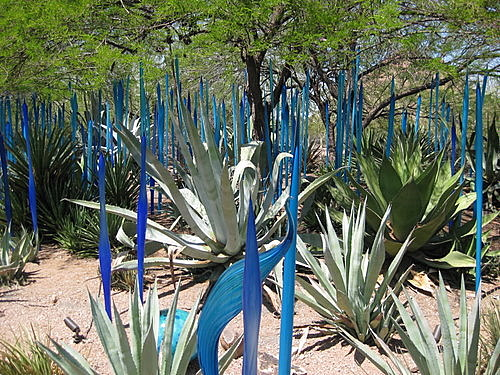 Blue Dale Chihuly Sculpture Arizona Desert Botantical Garden