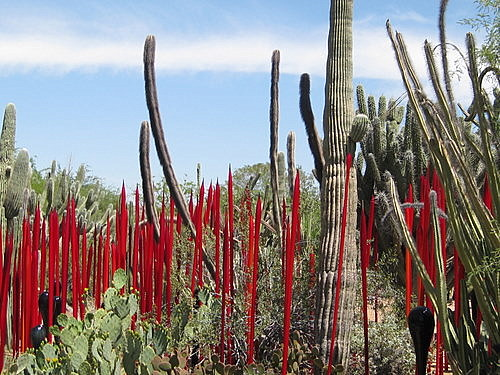 Red Dale Chihuly Sculpture Arizona Desert Botantical Garden