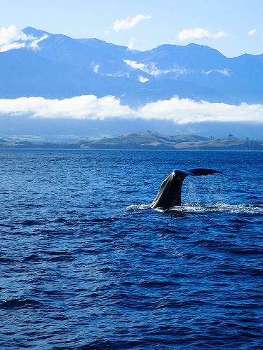 Whale, New Zealand