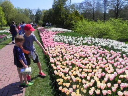 Admiring the tulips at Longwood Gardens