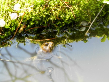 The first frog of spring at Longwood Garden