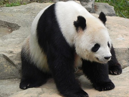 Some interesting facts about pandas