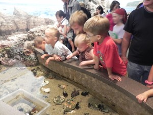 Touch tank at the New England Aquarium