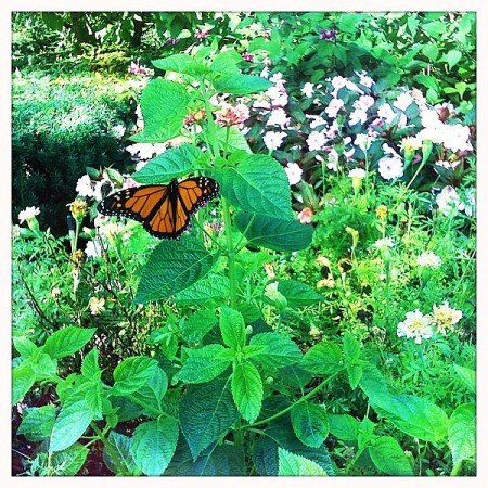 Butterfly at Longwood Gardens