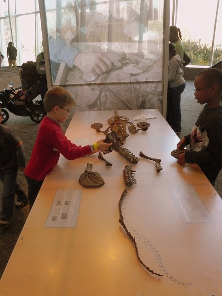 Building a dinosaur at the Maryland Science Center