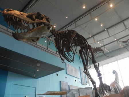 T Rex at the Maryland Science Center