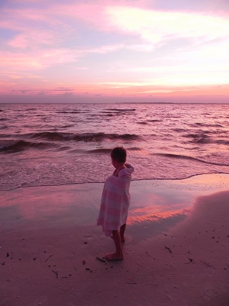 Teddy on a pink Fort Myers beach at sunset