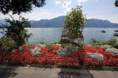 Flowers in Montreux, Switzerland