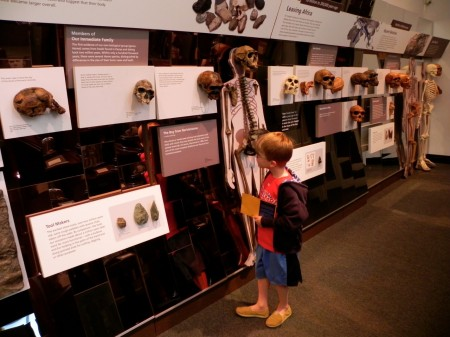 Human Evolution gallery at the Penn Museum
