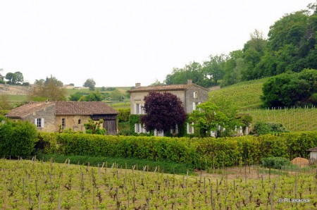 A vineyard near Saint-Émilion.