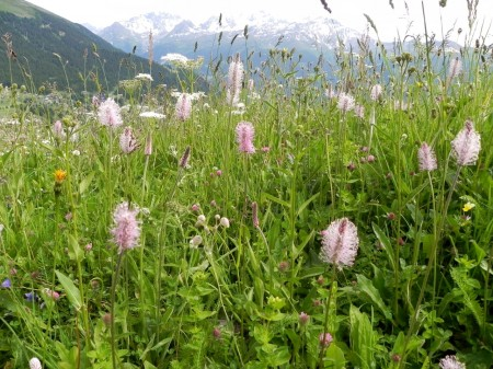 It was hard to decide what was prettier in Verbier: Flowers or mountains?