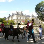 Best of France: Ponies in Le Jardin du Luxembourg