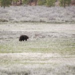 Postcards from the road: Northstar bear