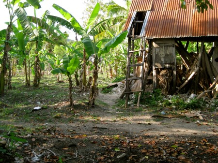 Farm in Niva, Haiti