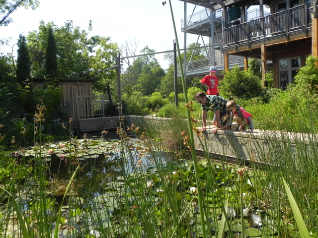 Loved this gorgeous urban garden with water lilies. #milwaukee #wisconsin #familytravel