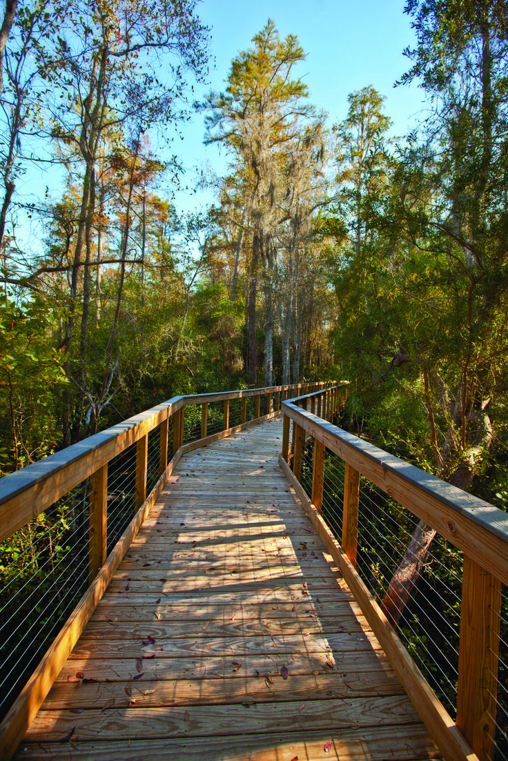 Conservation Park Boardwalk