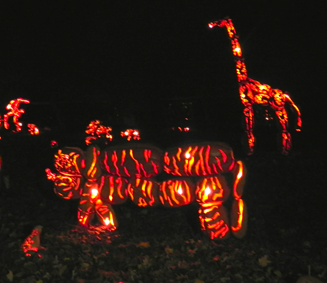 Great Jack O'Lantern Blaze Zoo